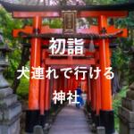 初詣2020犬連れで行ける神社はどこ?東京のおすすめと注意点や時間帯についても