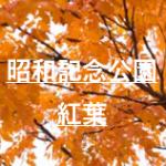 昭和記念公園紅葉2019の現在!ライトアップと紅葉祭りはいつまで?入口やマップも紹介!